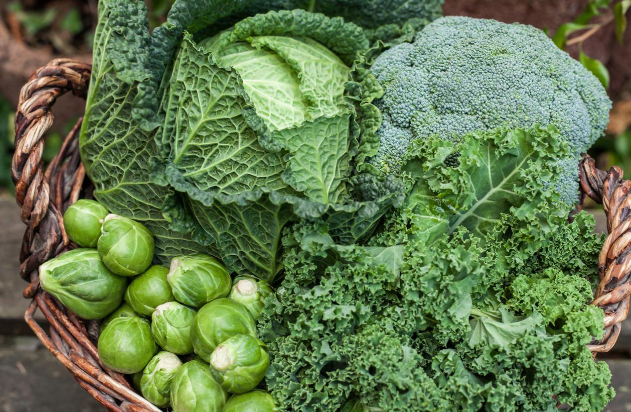 Carolinas Winter Vegetable Garden