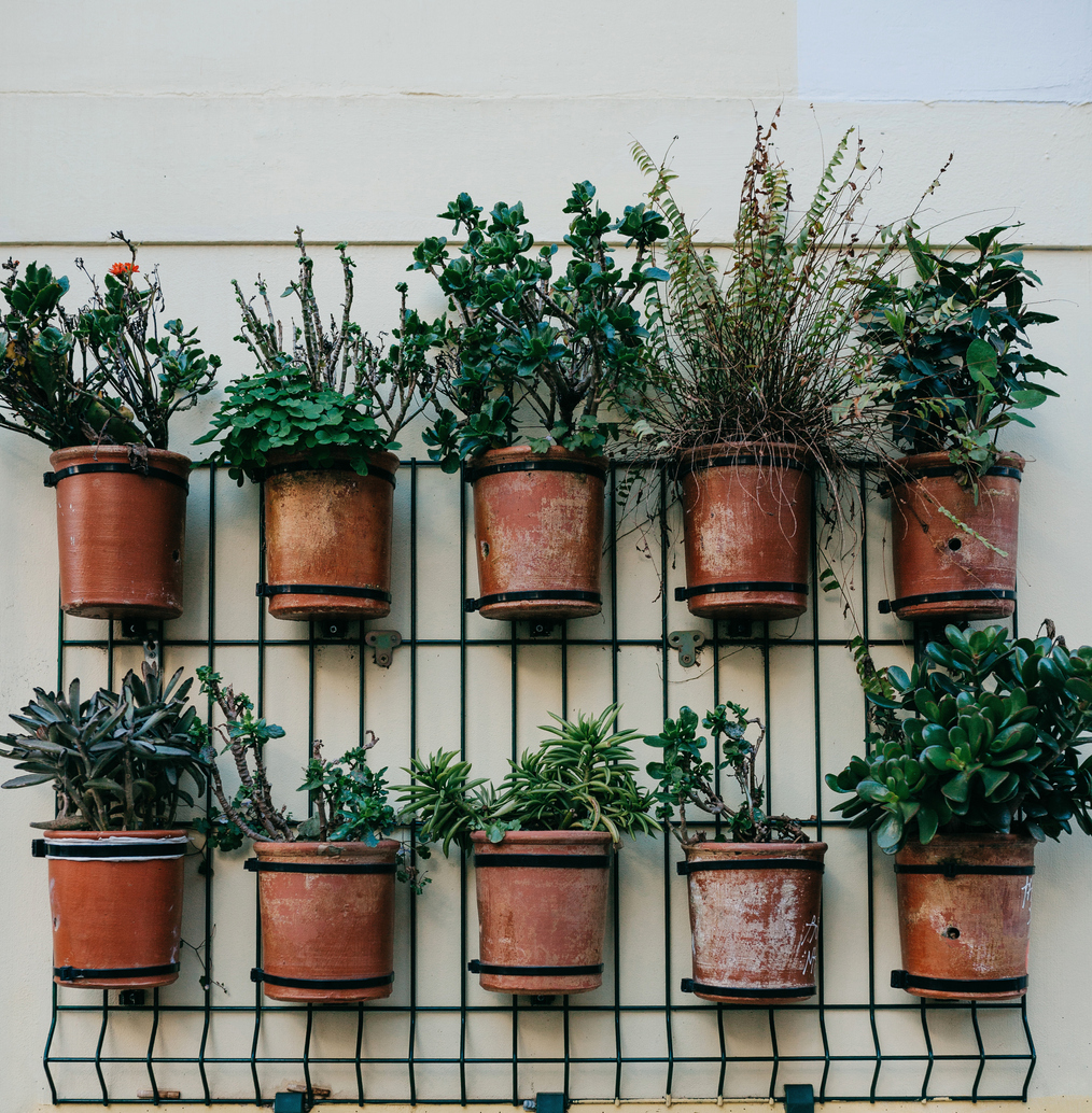 Creating an Herb Garden on Your Kitchen Wall