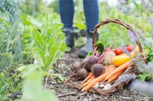 Creating a Cool Season Vegetable Garden
