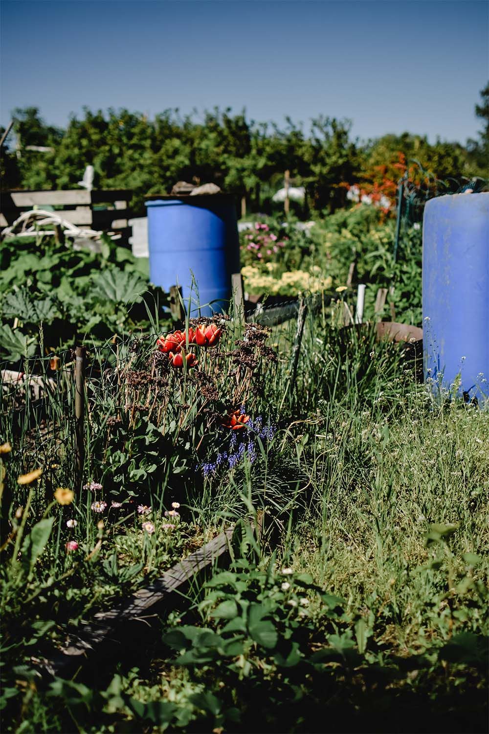 vegetables-garden-to-table-an-extension-of-your-kitchen-alair-cuyahoga-falls
