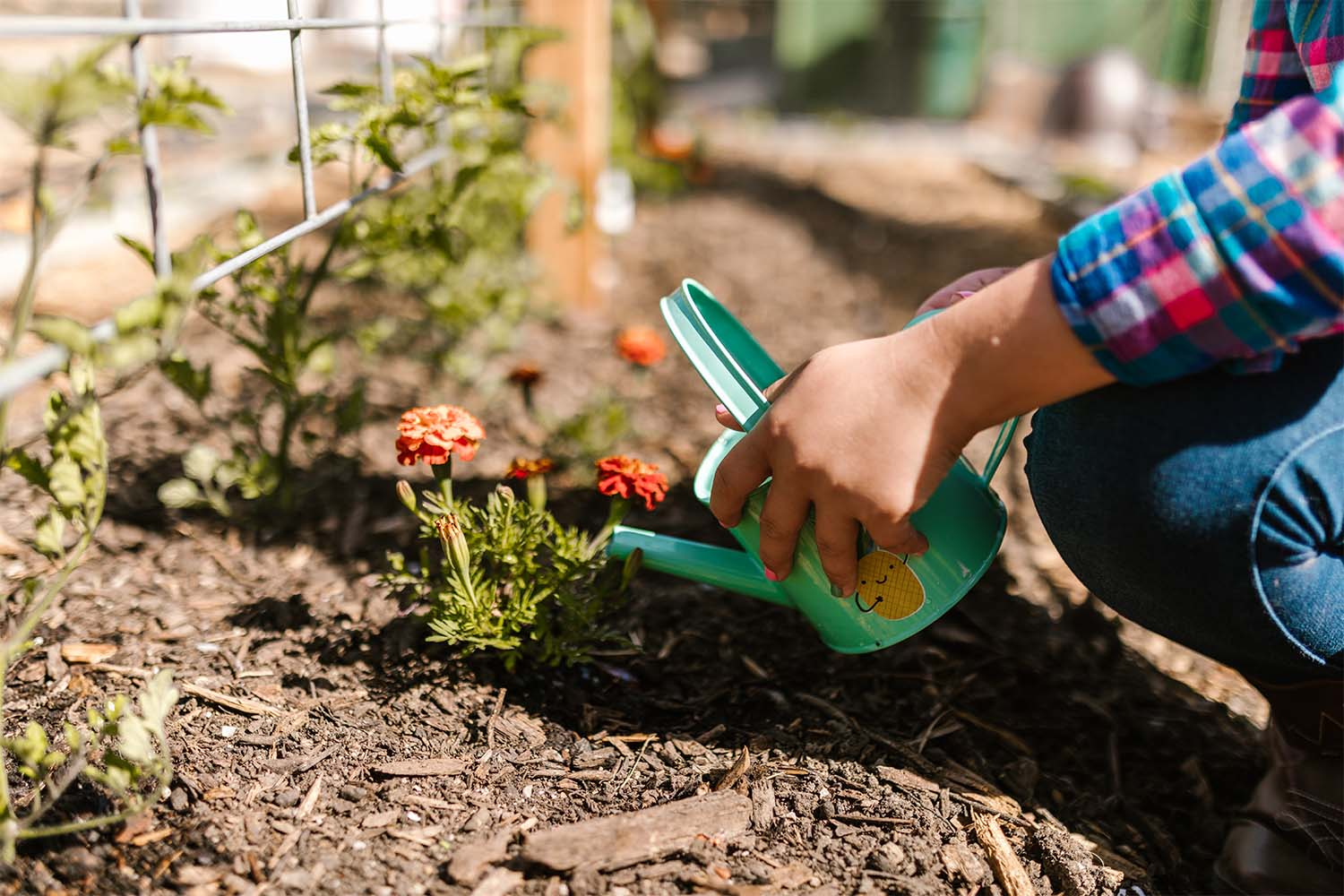 veggies-garden-to-table-an-extension-of-your-kitchen-alair-cuyahoga-falls