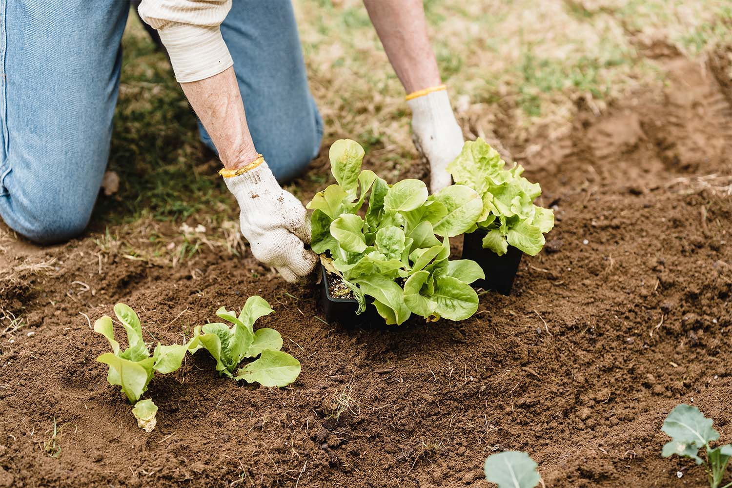 lettuce-garden-to-table-an-extension-of-your-kitchen-alair-cuyahoga-falls